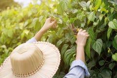 Ogrodniczki są tnącymi drzewami fotografia stock