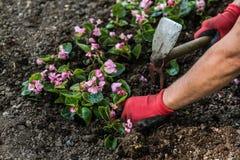 Ogrodniczki Wręczają z rękawicznikami Zasadza kwiaty Fotografia Stock
