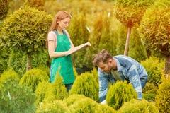 Ogrodniczki z doniczkowym drzewem Fotografia Royalty Free