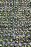 Ogrodniczy flancowanie fotografia royalty free