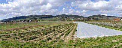 Ogrodniczy gospodarstwo rolne przy wiosn? zdjęcia stock