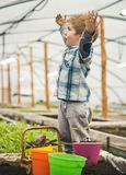 ogrodnik szczęśliwa szczęśliwy mały ogrodniku szczęśliwa ogrodniczka z nastroszonymi rękami w szklarni szczęśliwy ogrodniczki spo obrazy royalty free