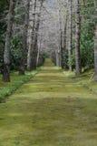 ogrodowa ścieżka obrazy stock
