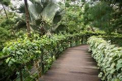 ogrodowa ścieżka tropikalna fotografia stock