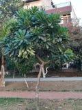 Ogrodowa boczna roślina Zdjęcia Royalty Free