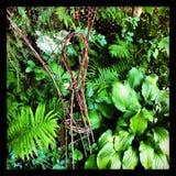 Ogrodowa czarodziejka Fotografia Royalty Free