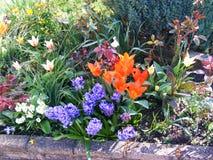 Ogrodowa flowerbed granica z mieszanymi kwiatami Zdjęcia Stock