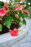 ogrodowa flowerbed waza Zdjęcie Stock