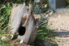 Ogrodowa przyrody przysta? Pi?kna dudni?ca drzewnego baga?nika je?a domu dekoracja zdjęcia stock