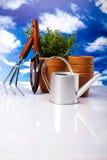 Ogrodowa roślina, żywy jaskrawy wiosny pojęcie Obraz Stock
