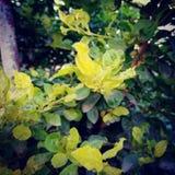 Ogrodowa roślina zdjęcia stock