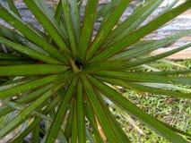 Ogrodowa roślina Zdjęcia Royalty Free