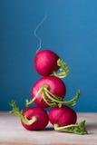 Ogrodowa rzodkiew na drewnianym stole, zamyka up ogórkowej wiosny sałatkowej warzyw pomidorowe użyteczne witaminy Fotografia Stock