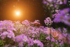 Ogrodowa sceneria Zdjęcie Stock