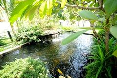 ogrodowa siklawa zdjęcie stock