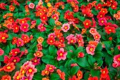 Ogrodowa szklarnia agribusiness obrazy royalty free