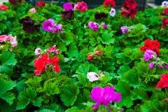 Ogrodowa szklarnia agribusiness zdjęcie stock