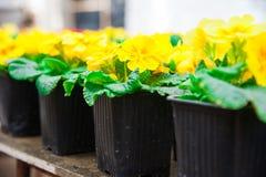 Ogrodowa szklarnia agribusiness Obrazy Stock