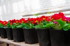 Ogrodowa szklarnia agribusiness Fotografia Stock