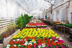 Ogrodowa szklarnia agribusiness Fotografia Royalty Free