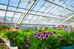Ogrodowa szklarnia agribusiness zdjęcie royalty free