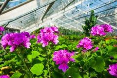 Ogrodowa szklarnia agribusiness zdjęcia royalty free