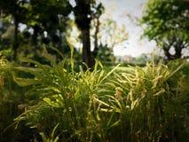 Ogrodowa trawa w podwórko fotografia stock