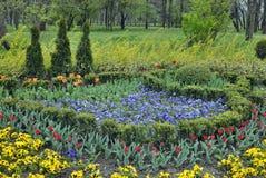 ogrodowa wiosna obrazy royalty free