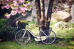 ogrodowa wiosna Fotografia Stock