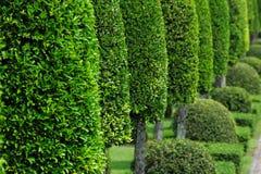 ogrodowa zieleń Zdjęcia Royalty Free