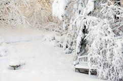 ogrodowa zima obrazy royalty free