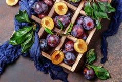 Ogrodowe śliwki na stole Zamyka up świeże śliwki z liśćmi Jesieni żniwo śliwki obraz stock