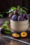 Ogrodowe śliwki na stole Zamyka up świeże śliwki z liśćmi Jesieni żniwo śliwki obrazy royalty free