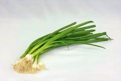 Ogrodowe Świeże Zielone cebule Obraz Royalty Free