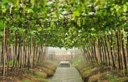 ogrodowe agriculturist pracy Zdjęcie Royalty Free