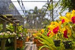 ogrodowe orchidee Zdjęcie Royalty Free