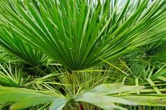 ogrodowe palmy zdjęcia stock