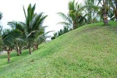 ogrodowe palmy Zdjęcie Royalty Free
