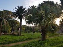 Ogrodowe palmy obraz stock