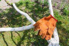 Ogrodowe pomarańczowe rękawiczki Zdjęcie Stock