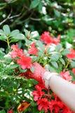 Ogrodowe rękawiczki dosięga dla kwiatów Zdjęcie Royalty Free