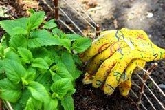 Ogrodowe rękawiczki na Małym ogrodzeniu Wokoło ziele ogródu Obrazy Royalty Free