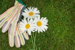 Ogrodowe rękawiczki i chamomile kwiaty Obrazy Stock