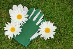 Ogrodowe rękawiczki i chamomile kwiaty Zdjęcie Stock