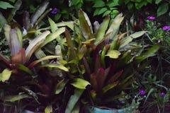 Ogrodowe rośliny fotografia royalty free