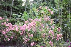 Ogrodowe rośliny obrazy stock