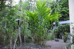 Ogrodowe rośliny zdjęcie stock