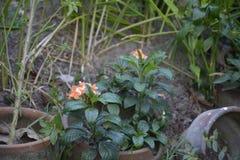 Ogrodowe rośliny zdjęcia stock