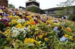Ogrodowego kwiatu mały park przy Czekoladową fabryką, Shiroi Koibito park Fotografia Stock