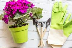 Ogrodowego mieszkania nieatutowe rzeczy Zielony garnek z kwitn?cymi purpurowymi kwiatami, instrumentami i gumowymi r?kawiczkami k zdjęcia stock